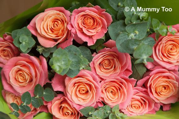 debenham-roses