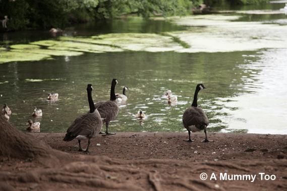 Lake at Wollaton Park