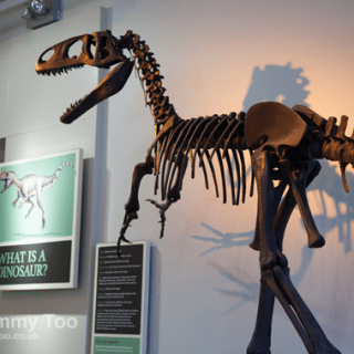 Dinosaurs, mummies and sensory play at the New Walk Museum & Art Gallery, Leicester (review)