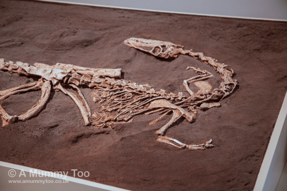 New-Walk-Museum-Fossil