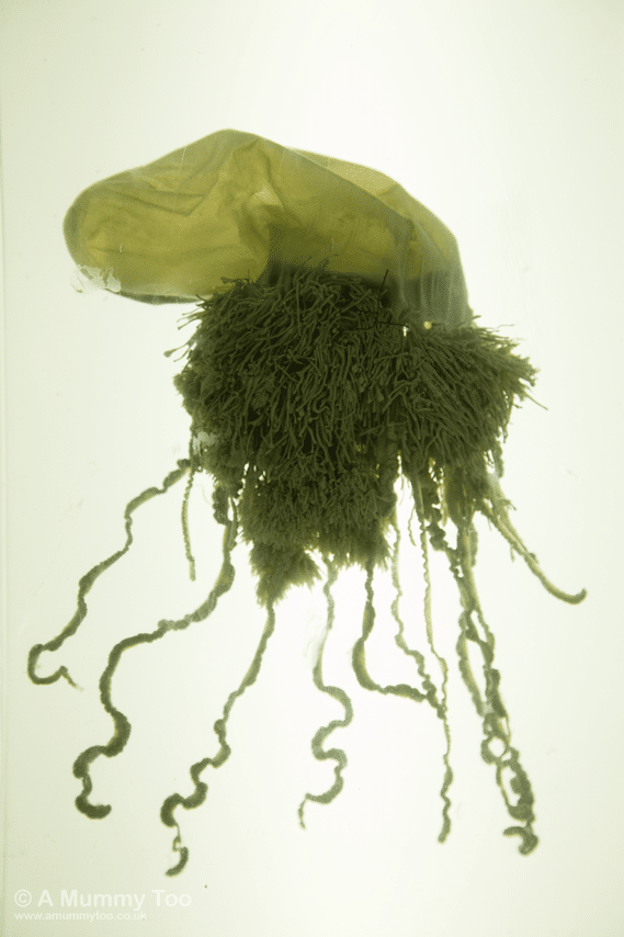 New-Walk-Museum-Jelly-Fish
