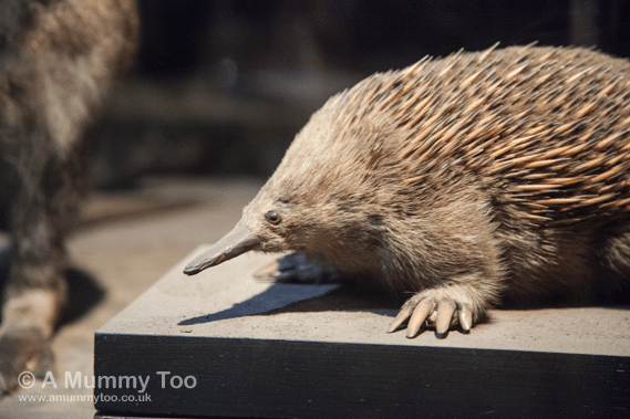New-Walk-Museum-Mammal