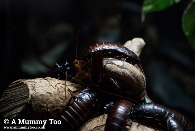 Bristol-Zoo-bugs