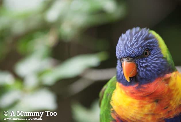 Bristol-Zoo-colourfulbird