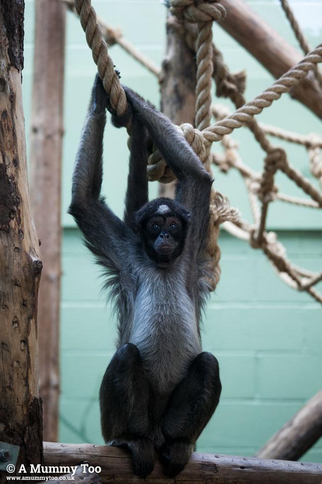Bristol-Zoo-monkey1