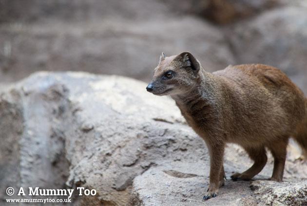 Bristol-Zoo-tinydogcatthing