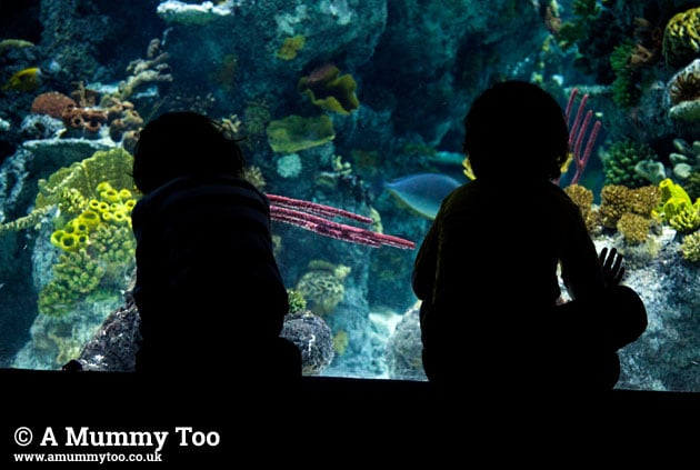 Bristol-aquarium-silouette