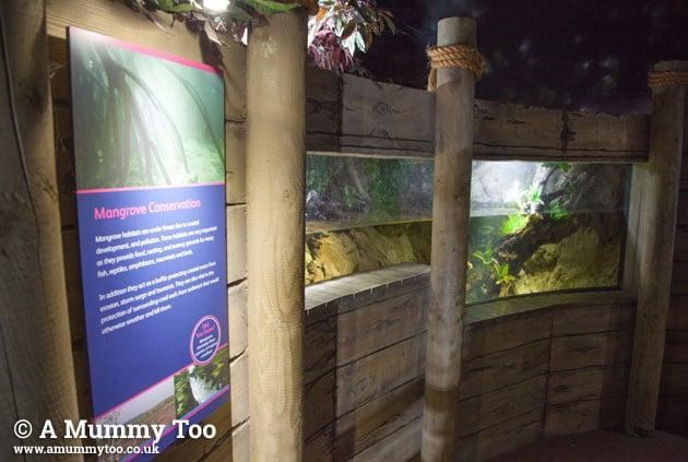 Bristol-aquarium-wall