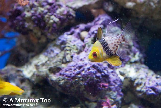 Sealife-patternfish