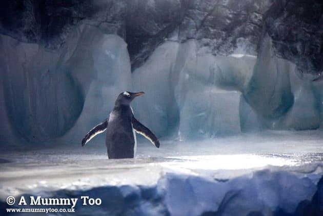 Sealife-penguin