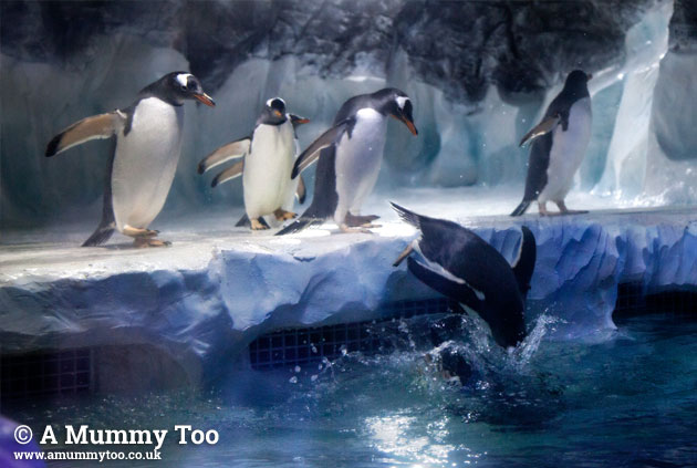 Sealife-penguins