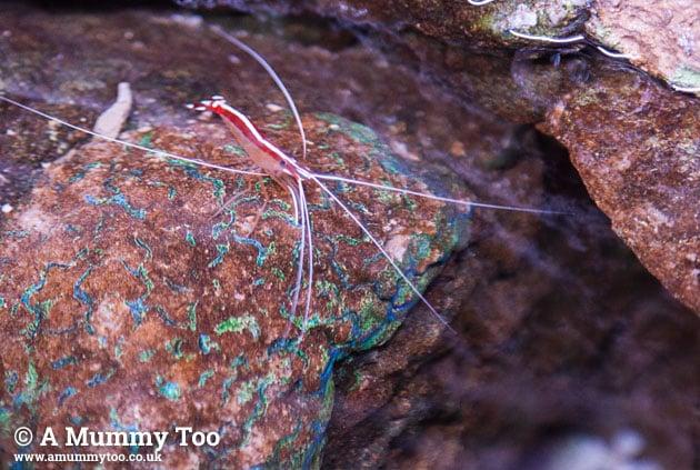 Sealife-shrimptypething