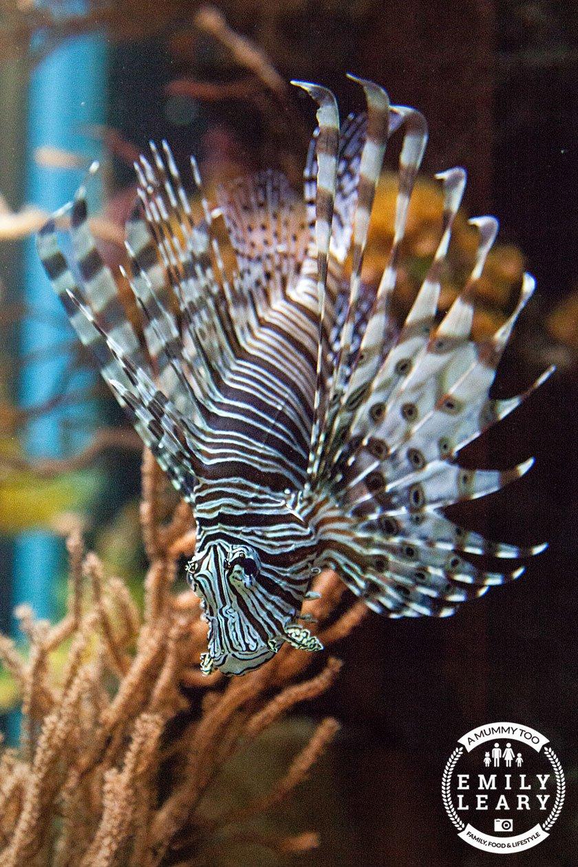 lionfish-nausicaa