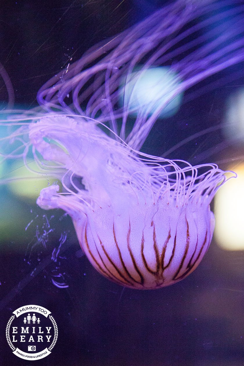 purple-jelly-fish-nausicaa