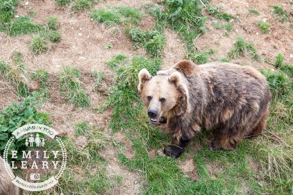ZSL-Whipsnade-Minions-Frubes-Brown-Bear-2