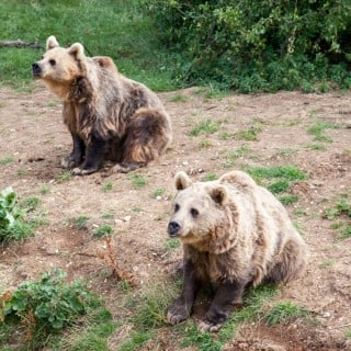 Minions of reasons to visit ZSL Whipsnade Zoo (review + giveaway, in partnership with Frubes)
