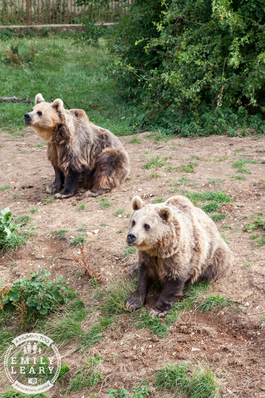 ZSL-Whipsnade-Minions-Frubes-Brown-Bears