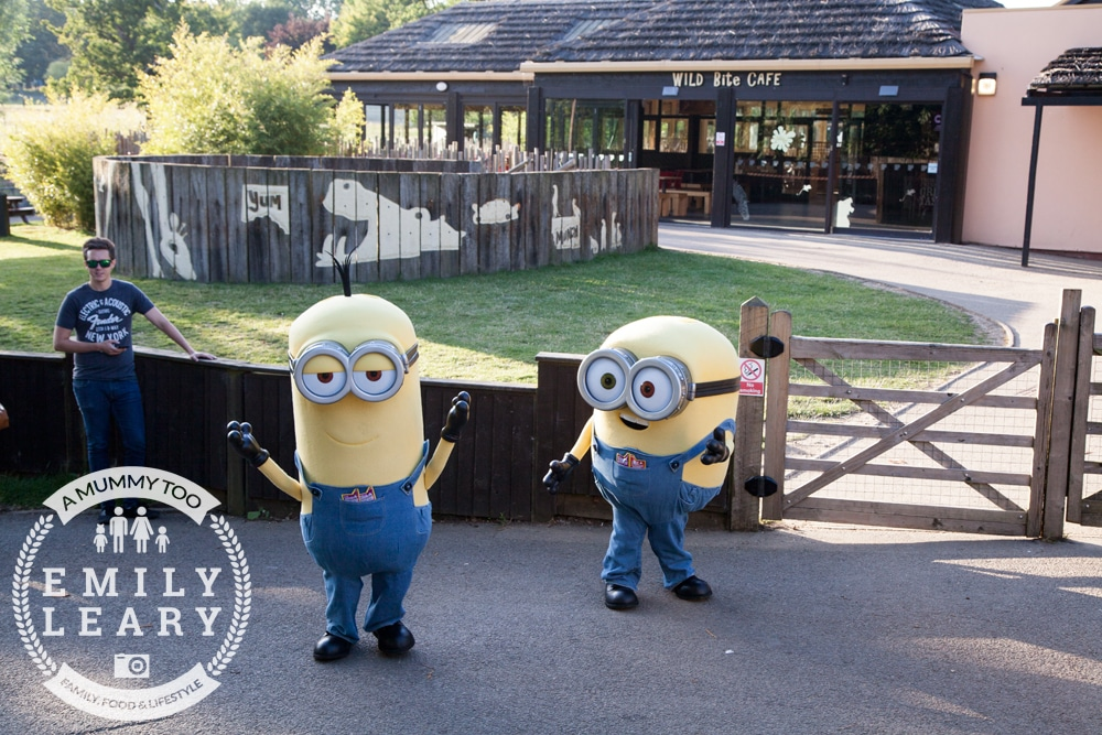 ZSL-Whipsnade-Minions-Frubes-Meet-and-Greet