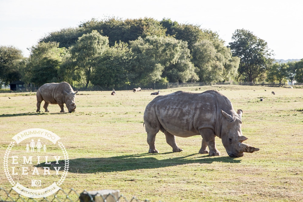 ZSL-Whipsnade-Minions-Frubes-Rhino