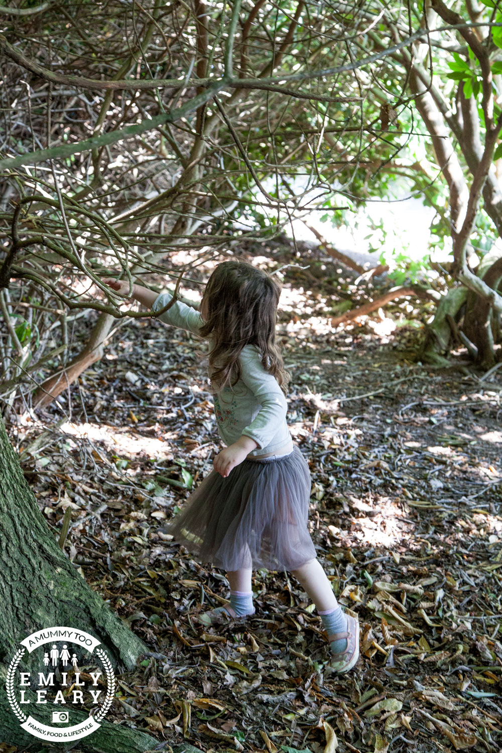 Exploring the woods at Clumber Park