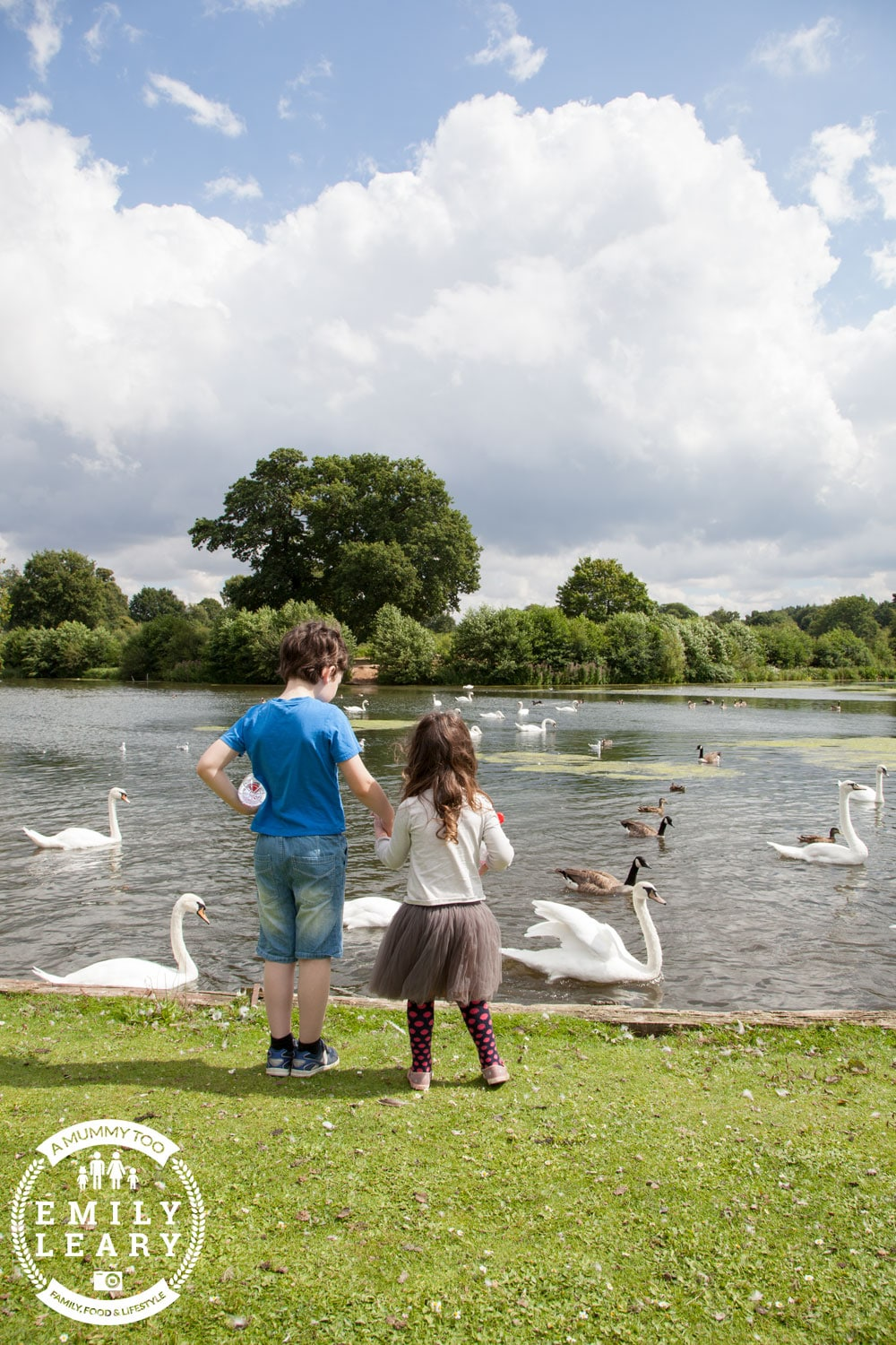 Kids with the swans at Clumber Park