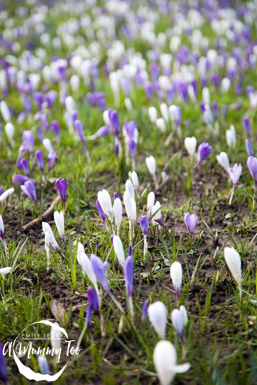 Haagen-Daaz-flowers