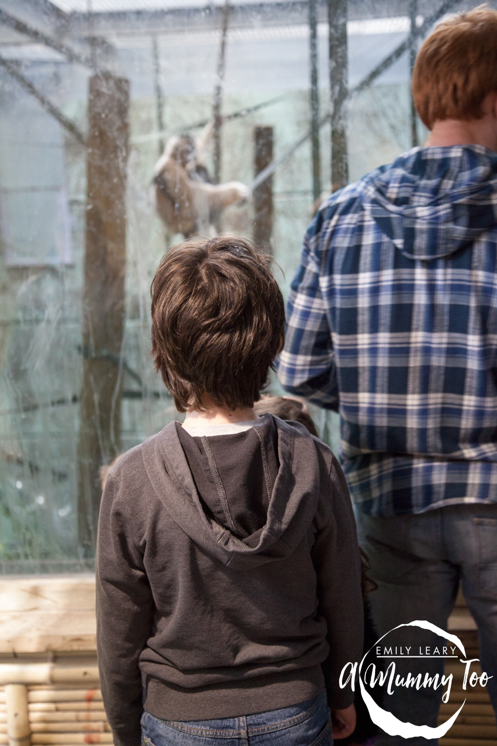 son-at-the-zoo