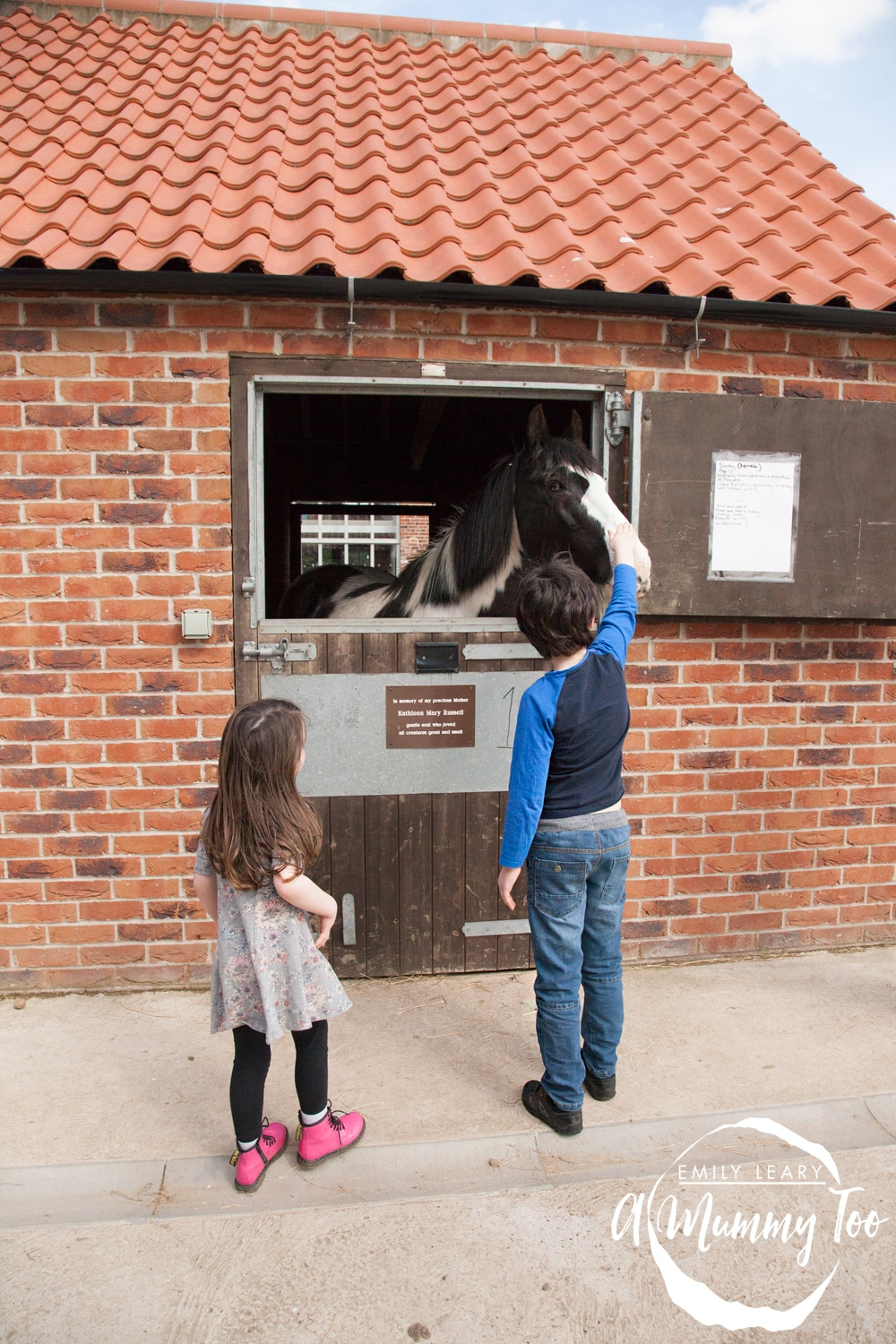 Petting-horses-at-bransby