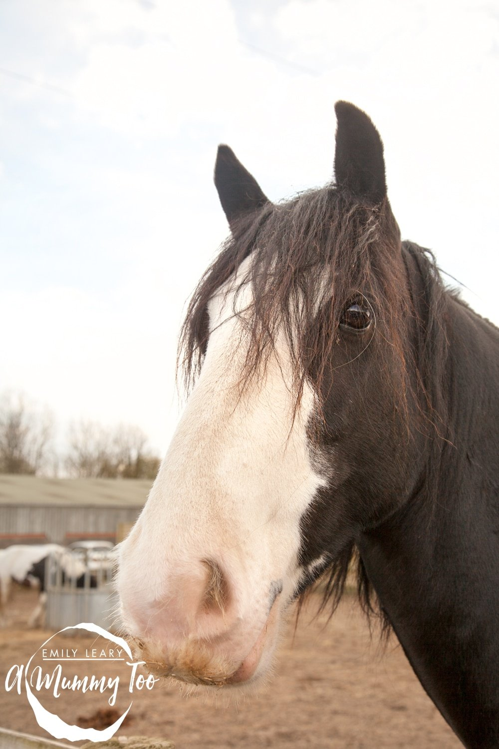 bransby-brown-and-white-horse