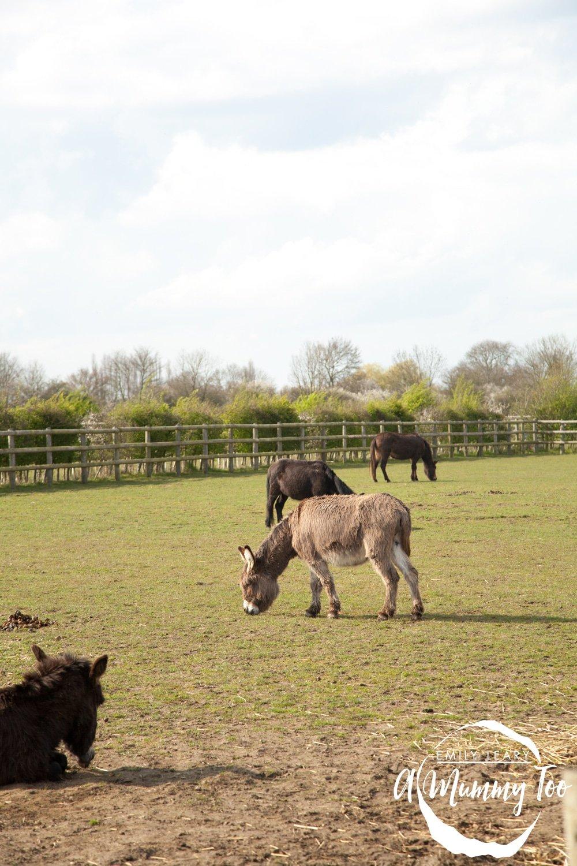 bransby-donkey