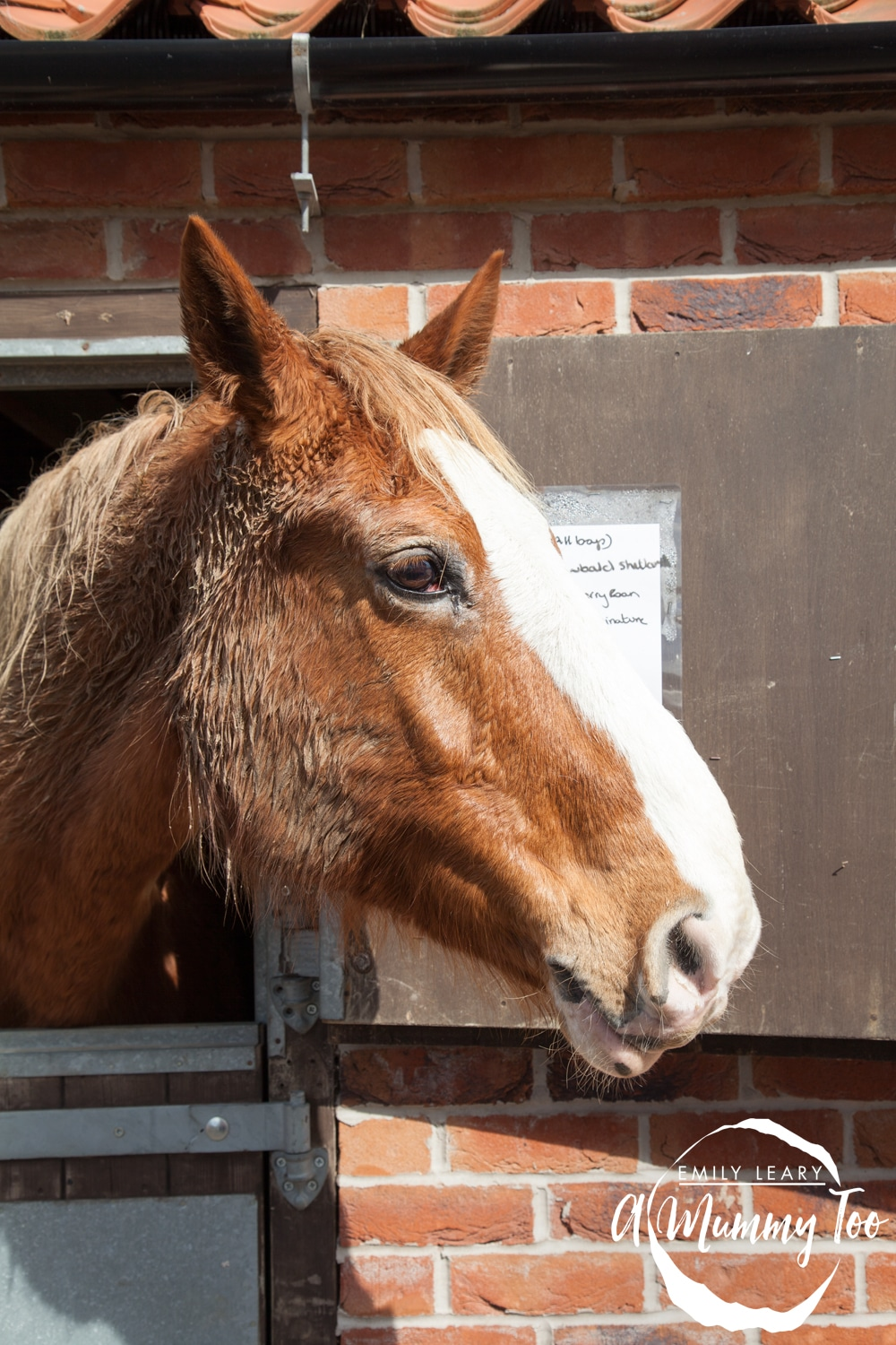 bransby-horse-in-stable
