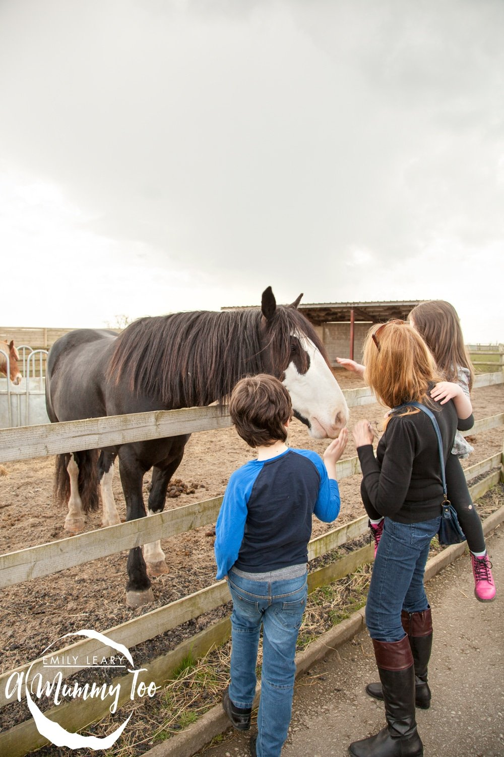 bransby-stroking-horses