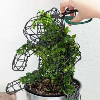 Topiary is on trend! My 'Power of Green' challenge with PG tips Green Tea