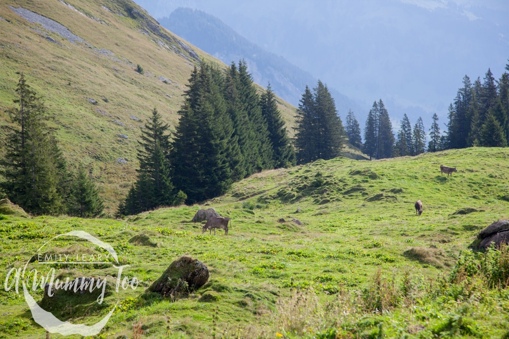 rupp-austria-visit-10