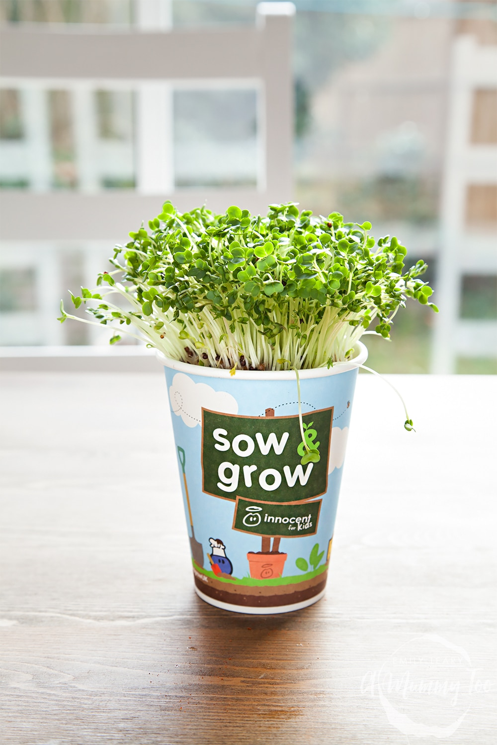 Home-grown cress in an innocent Sow & Grow pot