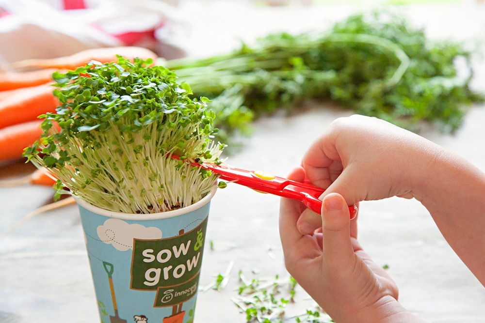 Assembling the sandwiches, adding a sprinkling of home-grown cress