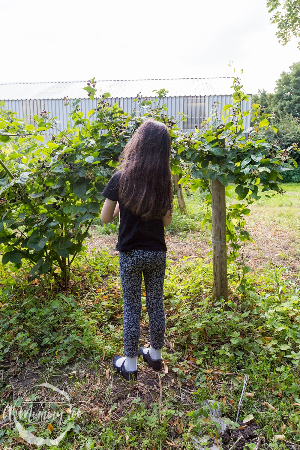 Going fruit picking as a family at a 'pick your own' farm with Robinsons