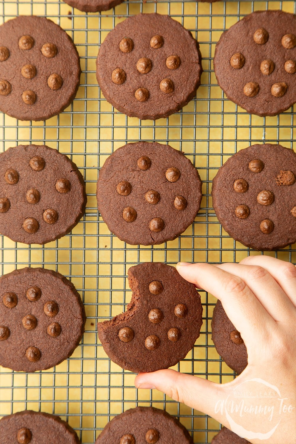Chocolate shortbread cookies, studded with chocolate drops, cooling on a wire rack. A hand holding one of the cookies, with a bit taken out of it.