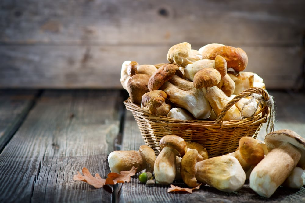 Can You Freeze Mushrooms A Mummy Too,Caffeine Withdrawal Symptoms Fever
