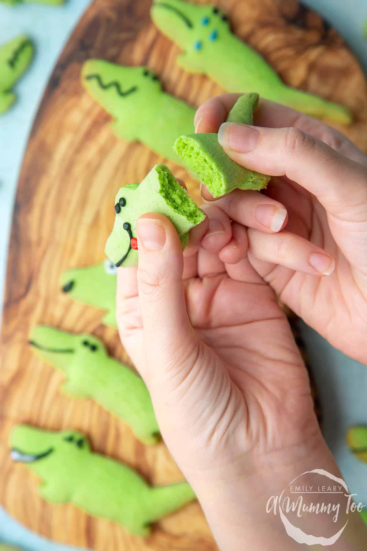 Hand breaking one of the crocodile cookies in half.
