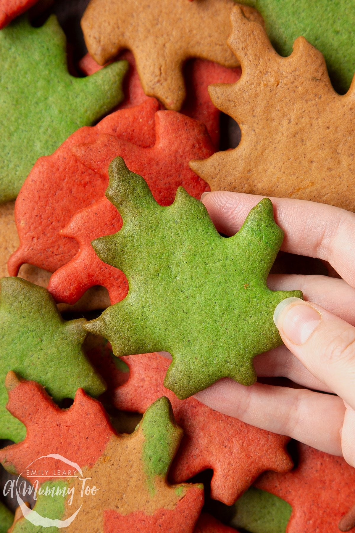 Hand holding a green autumn biscuits above a pile of colourful red, green and brown autumn cookies cut into the shapes of autumn leaves.