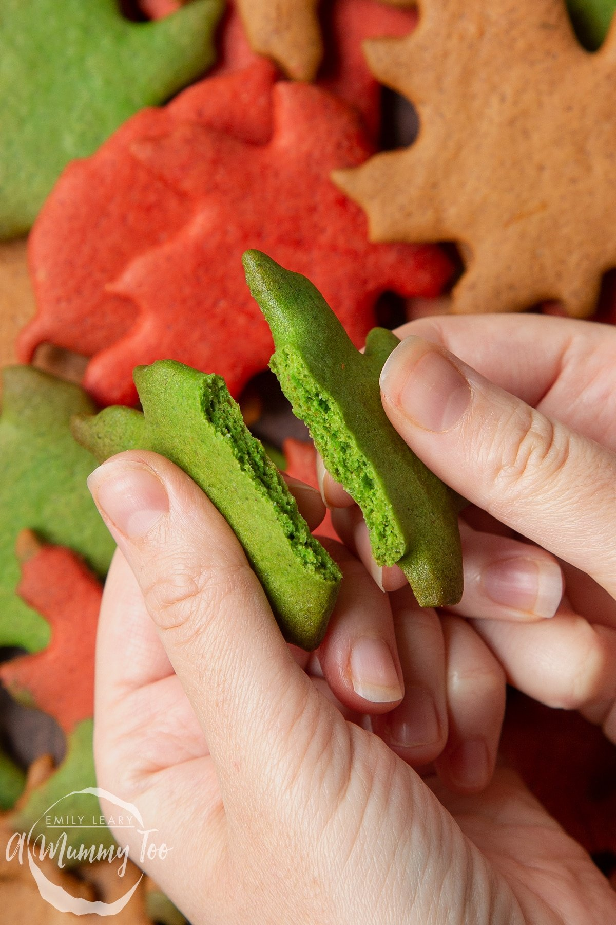 Hands breaking a green autumn biscuit in half above a pile of colourful red, green and brown autumn cookies cut into the shapes of autumn leaves.